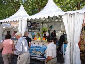 Lorient 2012: Opciones gastronomiqus en Lorient